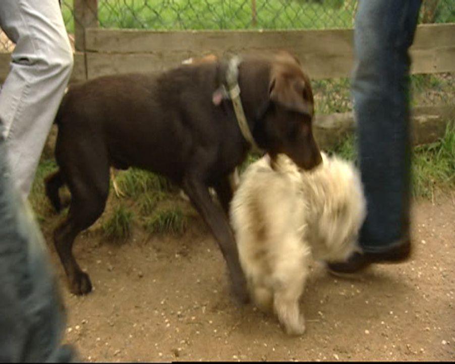 Stefanie ist Hundetherapeutin und hilft verzweifelten Hundebesitzern in ihrer häuslichen Umgebung. Ohne Gewalt und Sprache therapiert sie auch die... - Bildquelle: SAT.1 Gold