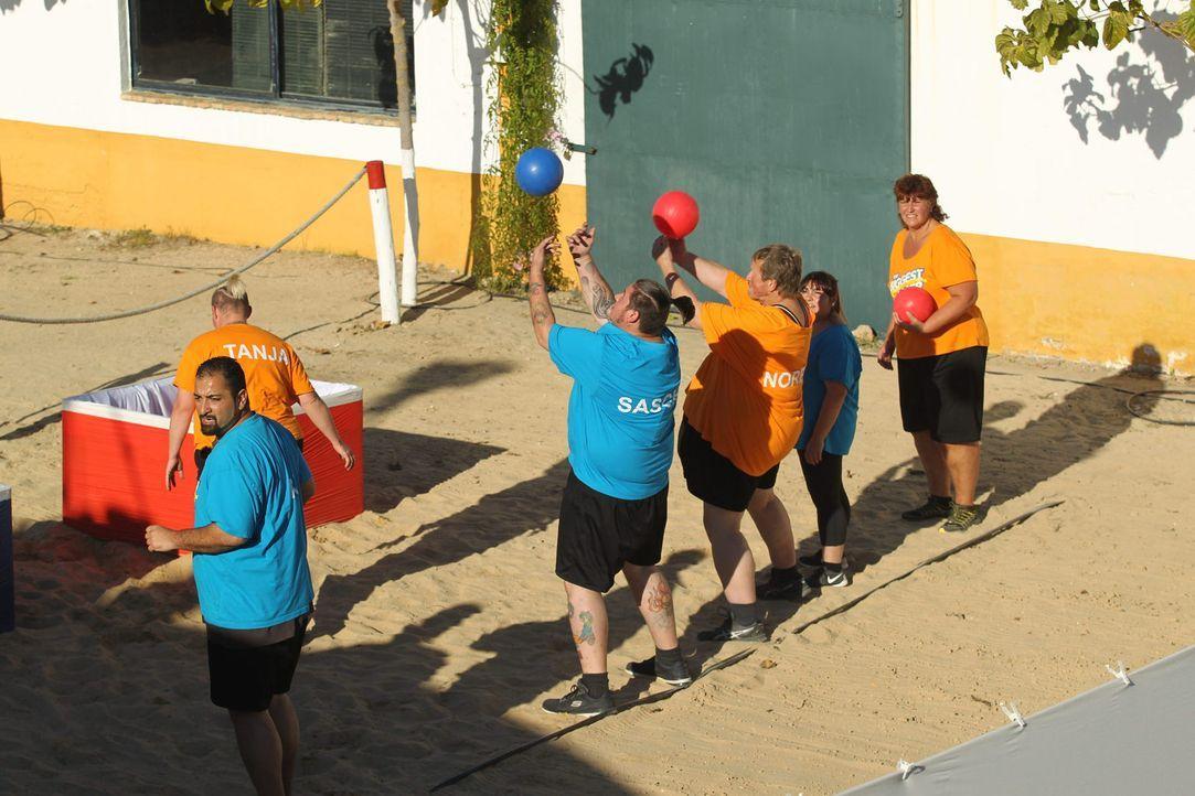 Welches Team gewinnt die neue Challenge? (v.l.n.r.) Umut, Tanja, Sascha, Norbert, Dani und Michaela ... - Bildquelle: Enrique Cano Sat.1