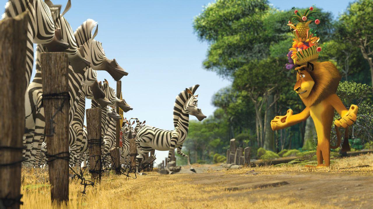 Erleben ein Abenteuer der ganz besonderen Art: Zebra Marty (M.) und Löwe Alex (r.) ... - Bildquelle: (2008) DREAMWORKS ANIMATION LLC. ALL RIGHTS RESERVED.