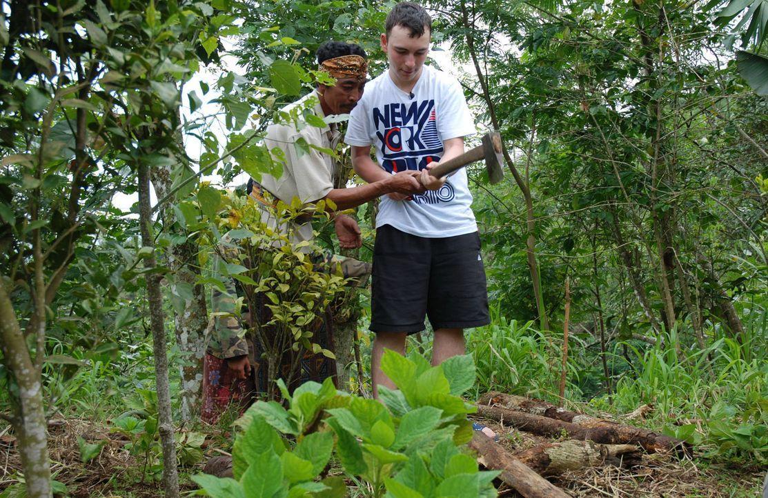 Zusammen mit seinem Gastvater Rinu (l.) muss Dominique (r.) im Wald Feuerholz beschaffen ... - Bildquelle: kabel eins