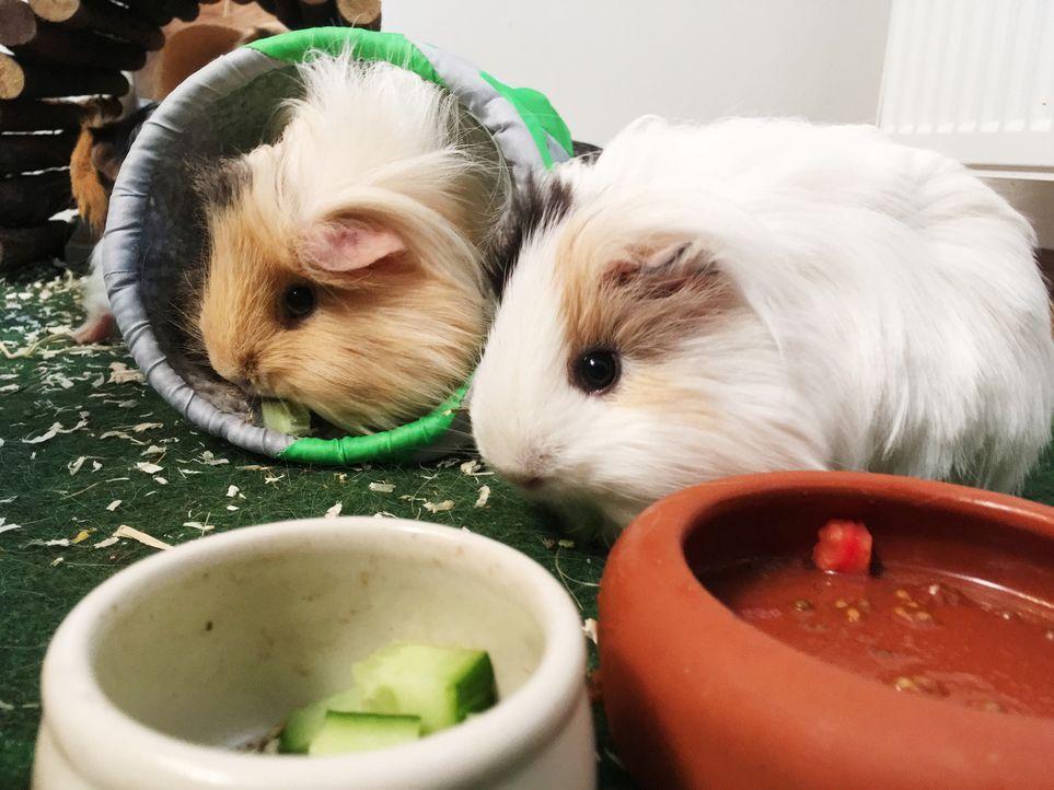 Wie können kleine Kapuzineräffchen das Leben von Querschnittsgelähmten erleichtern? Warum sind Spürhunde für Allergiker echte Lebensretter? - Diesen... - Bildquelle: SAT.1
