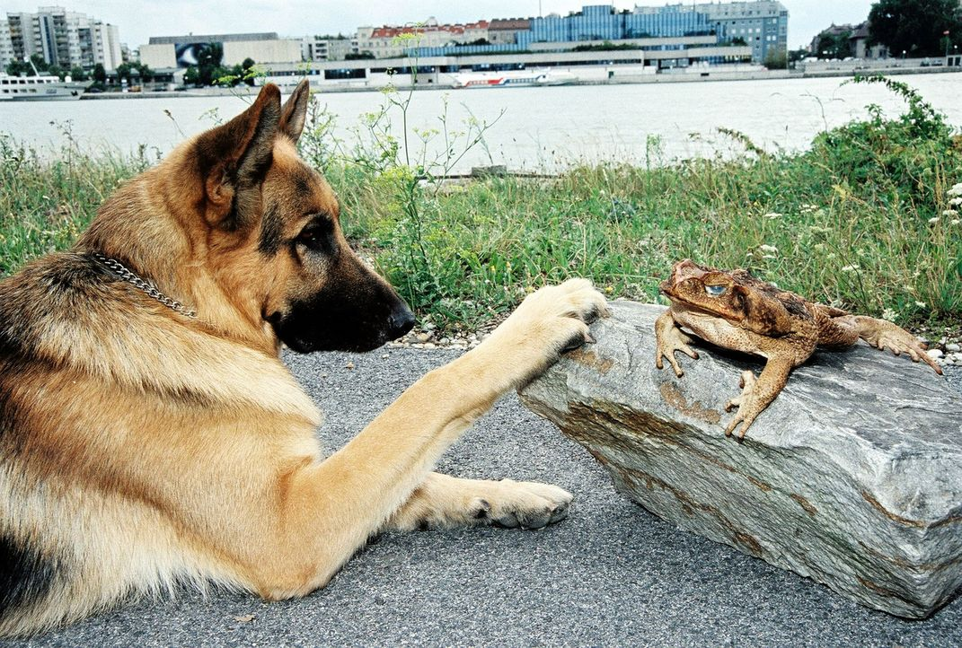Rex hat am Donauufer eine Entdeckung gemacht ... - Bildquelle: Sat.1
