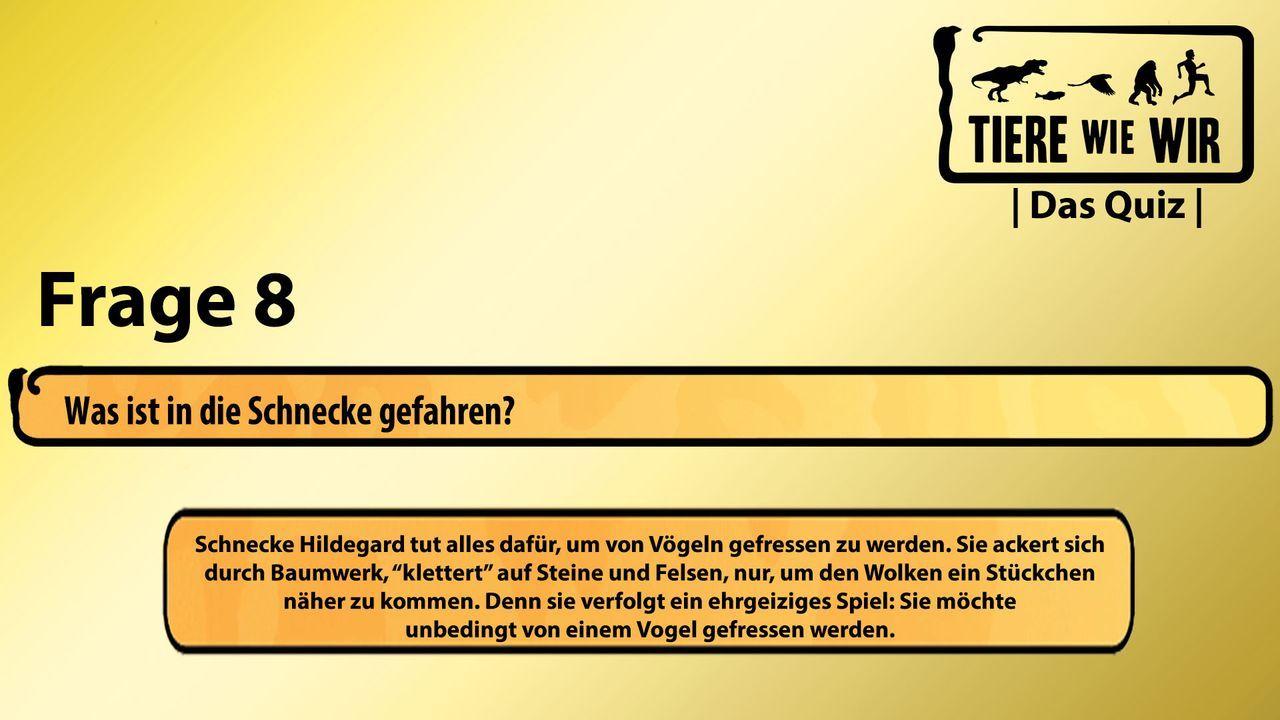 8_Frage_Schnecke