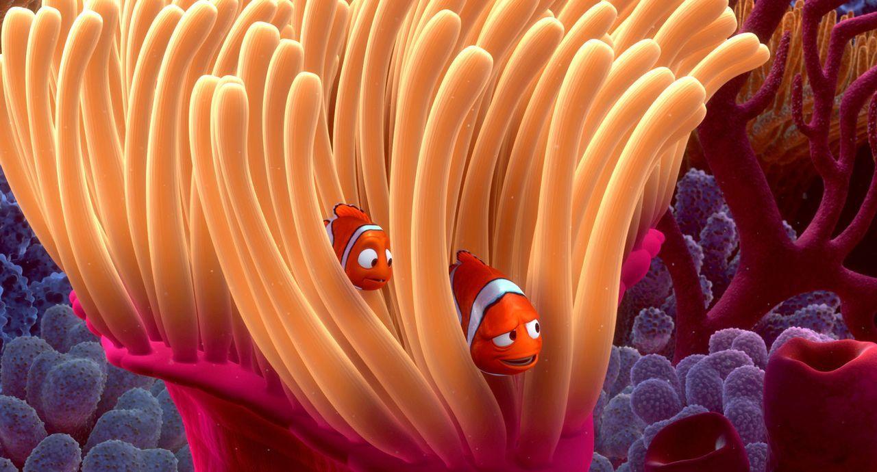 Nach dem Tod seiner Mutter lebt der kleine Clownfisch Nemo (l.) mit seinem Vater Marlin (r.) allein in der Anemone ? - Bildquelle: Walt Disney Pictures