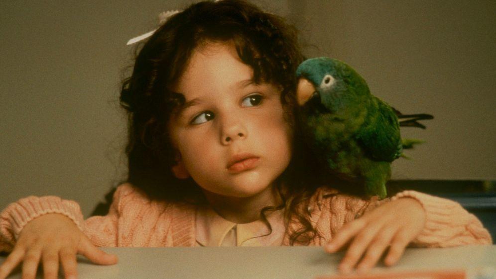 Paulie - Ein Plappermaul macht seinen Weg - Bildquelle: TM &   (1998) DREAMWORKS LLC. ALL RIGHTS RESERVED.