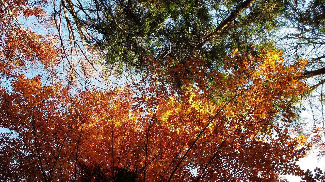 01-Buche-Fichte-natürlich-Natur-stock-adobe-com - Bildquelle: natürlich Natur - stock.adobe.com