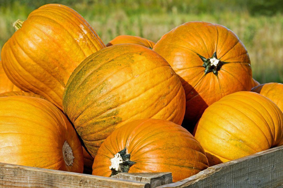 pumpkin-2715052_1920 - Bildquelle: Pixabay