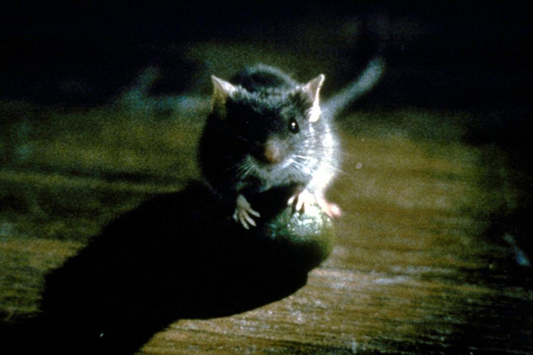 Eine kleine graue Maus wehrt sich gegen den Abriss ihrer Unterkunft. Und ihr Widerstand ist stärker als erwartet ... - Bildquelle: TM+  1997 DreamWorks LLC. All Rights Reserved.