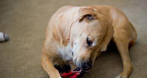 #nur EIN Spielzeug für den Hund kaufen