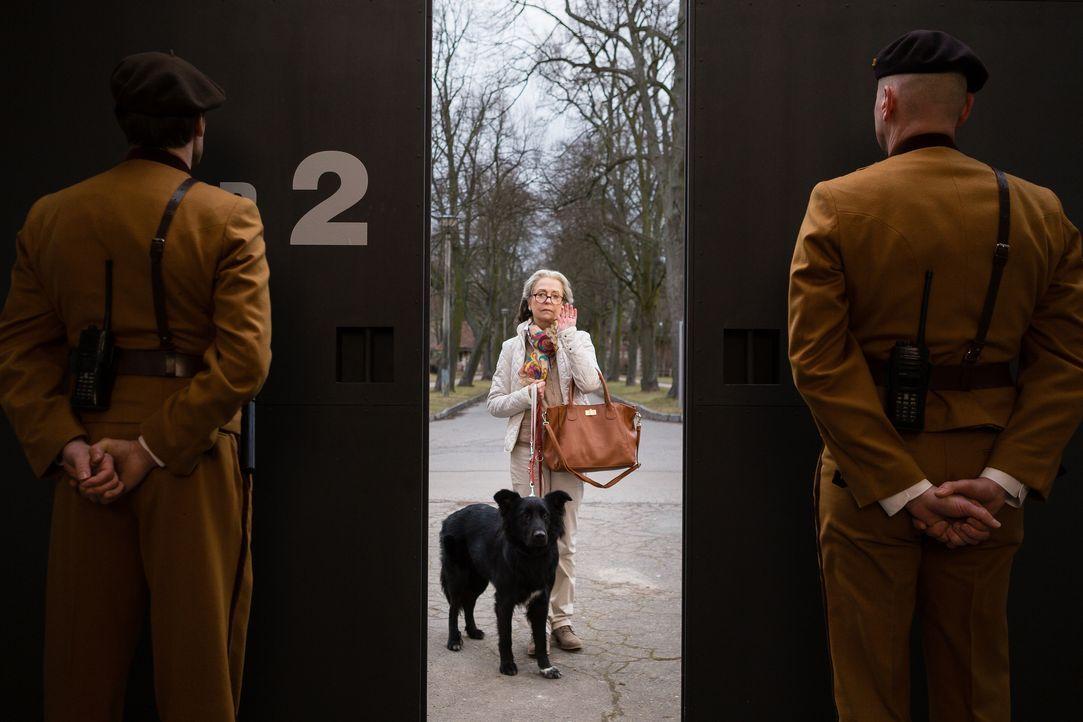 Die Udo Honig Story2 - Bildquelle: SAT.1 / Arvid Uhlig