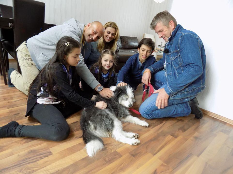 Hundetrainer Dirk Lenzen (r.) erklärt Familie Yapar aus Köln, worauf es beim Welpenkauf ankommt und stellt ihnen drei passenden Rassen vor ... - Bildquelle: SAT.1