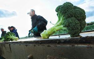 wintergemuese-broccoli-10-10-19-dpa