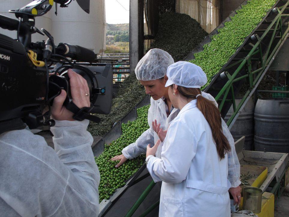 Der große Waren-Check - Wissen, was drin ist: Wo liegt der Unterschied zwischen grünen und schwarzen Oliven? Kristin Recke (M.) versucht das in Sp... - Bildquelle: SAT.1