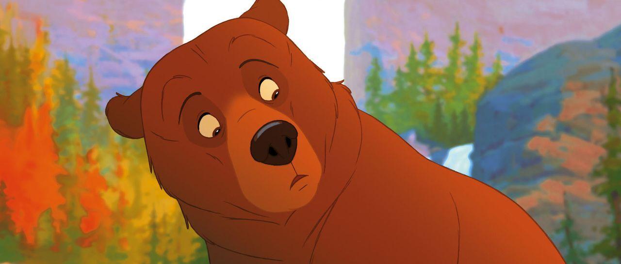 Nachdem er sich in einen Bär verwandelt hat muss Kenai erkennen, dass er einen großen Fehler gemacht hat ... - Bildquelle: Buena Vista Pictures Distribution. All Rights Reserved.