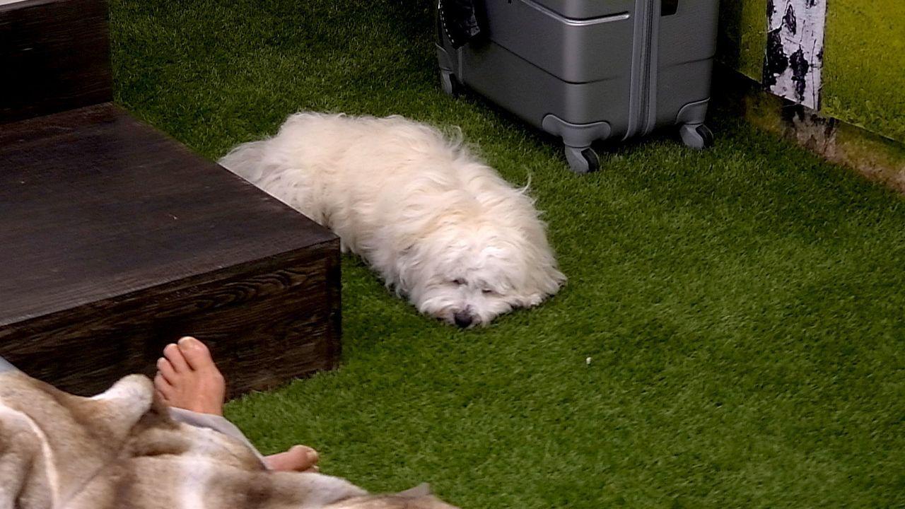 Tag1_Hund schlaeft - Bildquelle: SAT.1