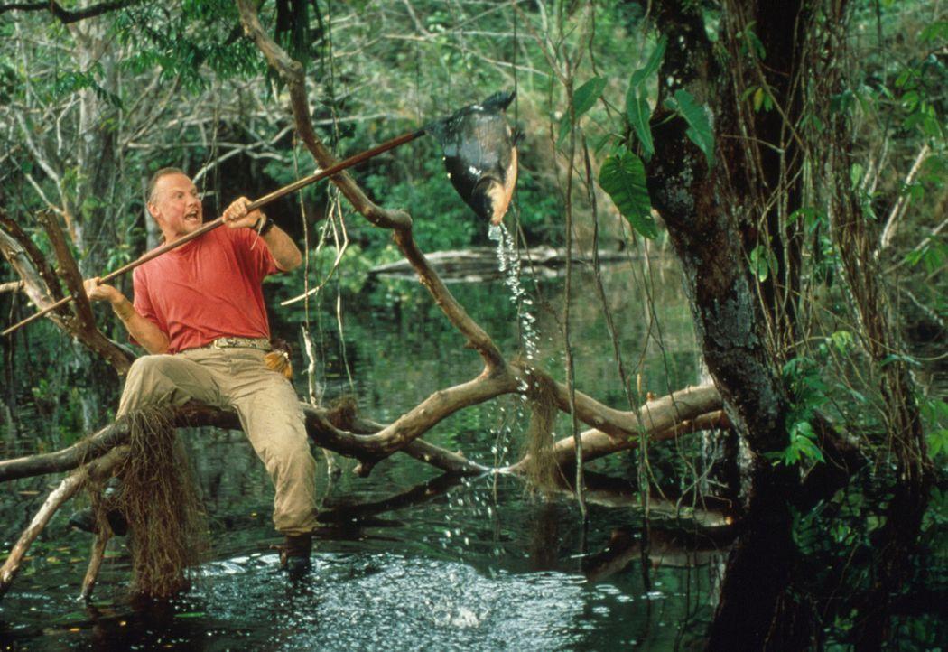 Ein guter Fang: Sarone (Jon Voight) jagt das Frühstück - oder den Schlangenköder ... - Bildquelle: Columbia TriStar