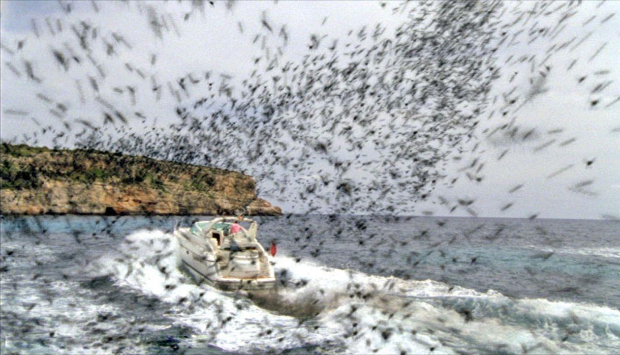 Auf der schönen Balearen-Insel Mallorca attackieren aggressive Bienenschwärme Menschen und Tiere. - Bildquelle: Sat.1