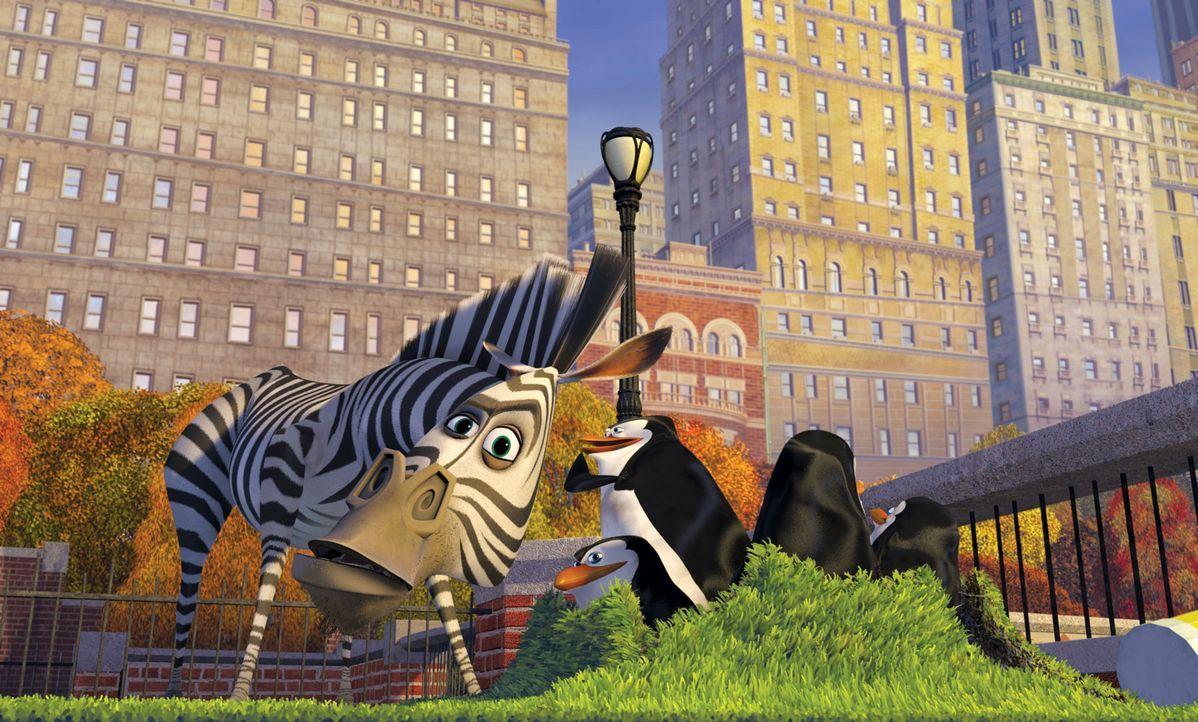 Der Löwe Alex, das Zebra Marty, die Giraffe Melman und das Nilpferd Gloria aus dem New Yorker Central Park Zoo sind die besten Freunde. Doch Marty... - Bildquelle: TM &   2004 DREAMWORKS ANIMATION SKG.