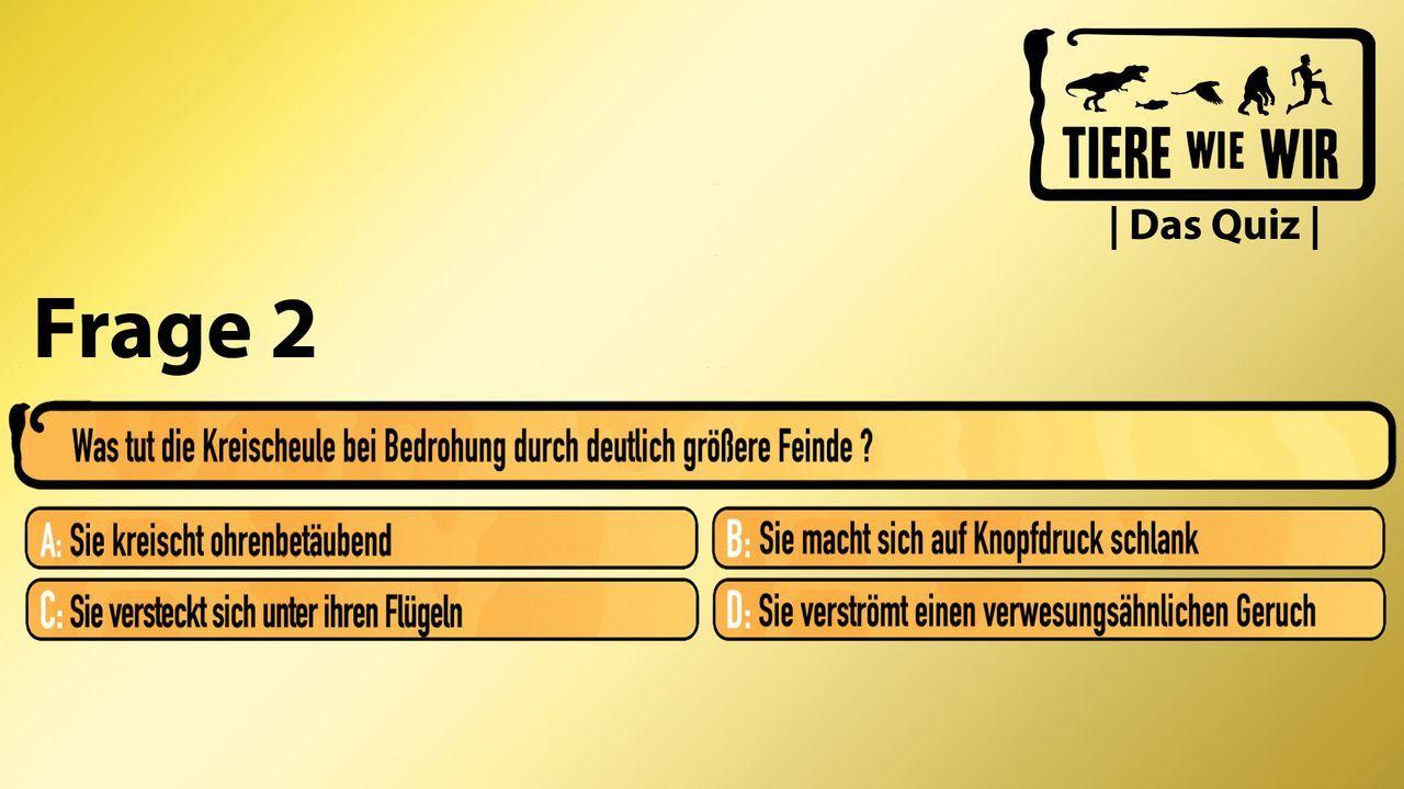 2_Frage_Kreischeule