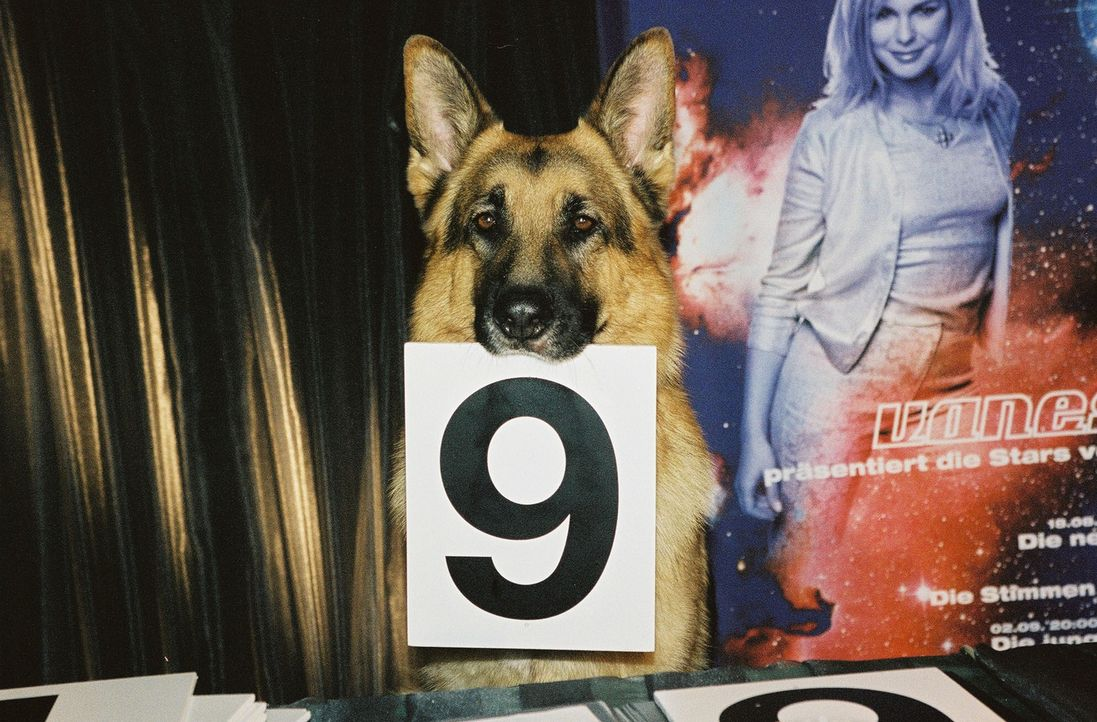 Rex als Juror bei einer Modenschau. - Bildquelle: Sat.1