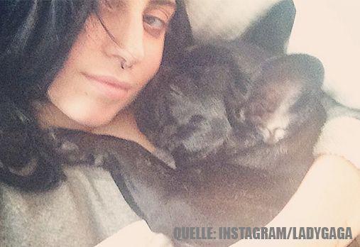 Lady Gaga_HundImBett