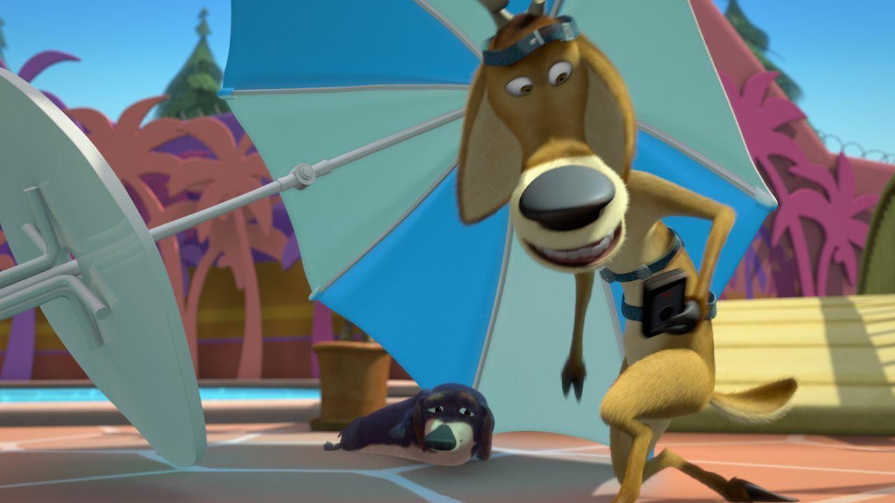 Den Dackel Herrn Wiener (l.) hat Elliot (r.) bereits gefunden, jetzt muss er nur noch seine geliebte Giselle aus den Fängen der Haustiere befreien! - Bildquelle: 2008 Sony Pictures Animation Inc. All Rights Reserved.