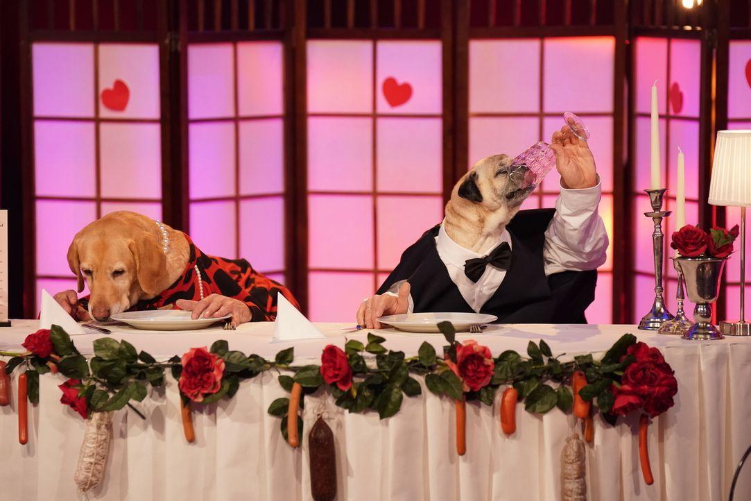 Eine Flasche, zwei pfiffige Vierbierbeiner und vier prominente Hände - das beste Rezept für Impro-Comedy? - Bildquelle: Guido Engels SAT.1/Guido Engels