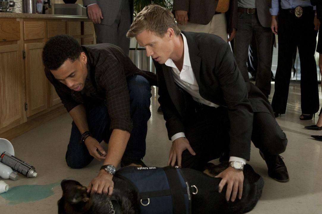 Die beiden Cops Travis (Michael Ealy, l.) und Wes (Warren Kole, r.) untersuchen die Schüsse auf einen Kollegen und kümmern sich währenddessen um... - Bildquelle: 2012 USA Network Media, LLC