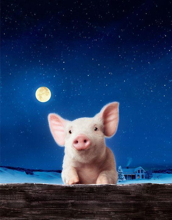 Schweinchen Wilbur und seine Freunde ... - Bildquelle: CBS International Television (ehem: Paramount Pictures International)