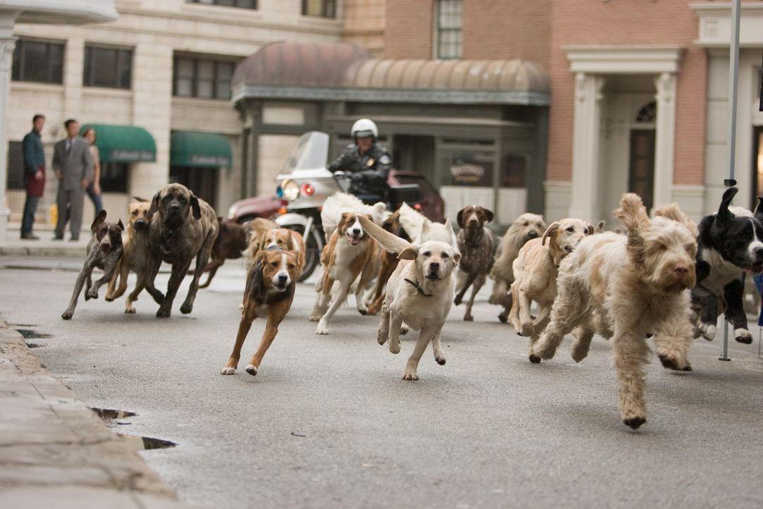 Auf der Flucht vor Polizei und Hundefängern ... - Bildquelle: MMVIII MavroCine Pictures GmbH & Co. KG All Rights Reserved.