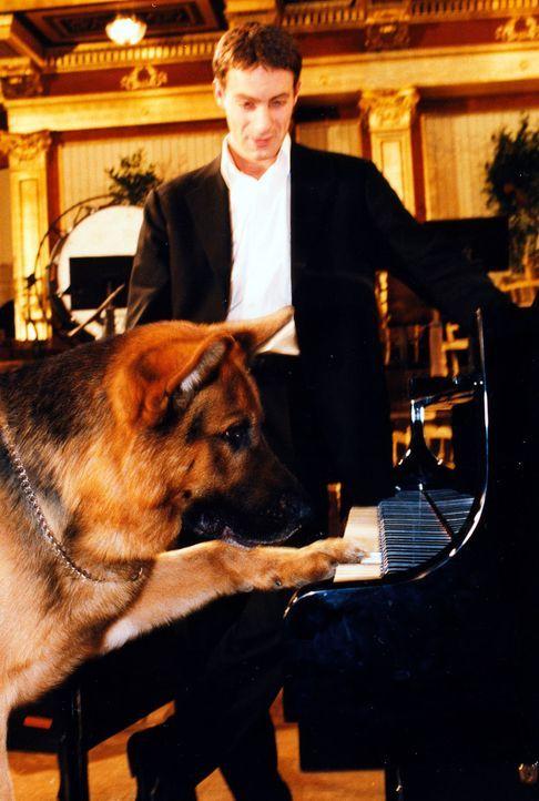Nachdem Kommissar Brandtner (Gedeon Burkhard, r.) endlich Maximilians Vater gefunden hat, interessiert sich Rex doch sehr für das Klavier im berühmt... - Bildquelle: Ali Schafler Sat.1