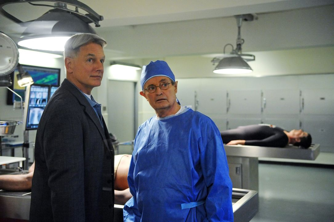 Ein neuer Mordfall beschäftigt Gibbs (Mark Harmon, l.) und Ducky (David McCallum, r.) ... - Bildquelle: 2012 CBS Broadcasting Inc. All Rights Reserved.