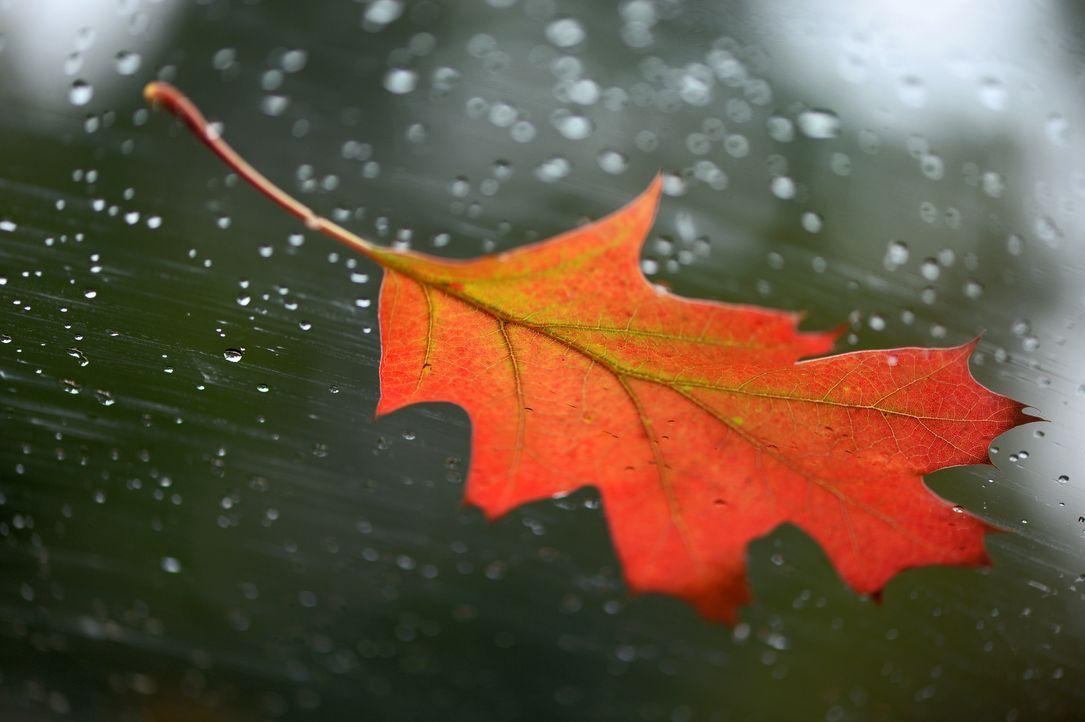 Herbsthoroskop - Bildquelle: dpa