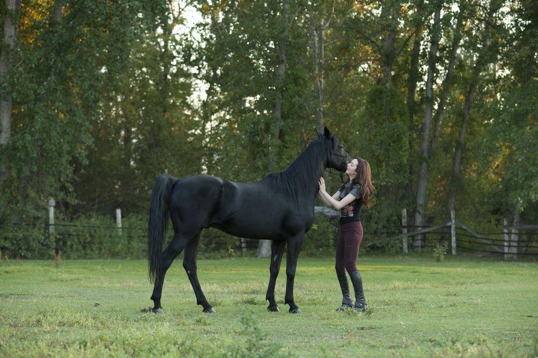 Der temperamentvolle Mustang Flicka hat gute Chancen den bevorstehenden Reitwettbewerb zu gewinnen. Seine Reiterin Kelly (Kacey Rohl) trainiert hart... - Bildquelle: 2012 Twentieth Century Fox Film Corporation. All rights reserved.