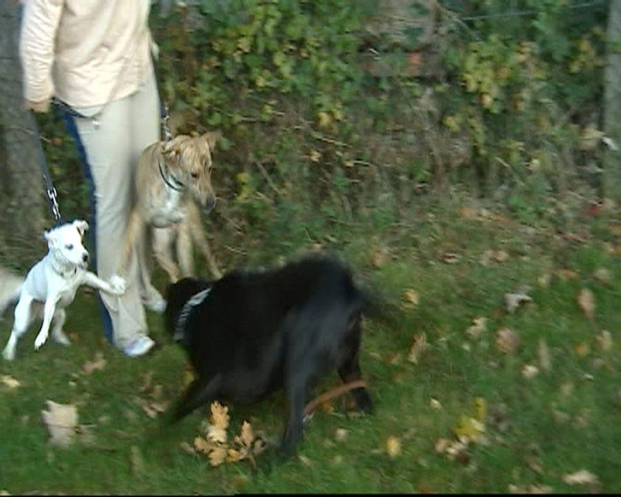 Stefanie ist Hundetherapeutin und hilft verzweifelten Hundebesitzern. Ohne Gewalt und Sprache therapiert sie auch sehr angriffslustige Hunde ... - Bildquelle: SAT.1 Gold