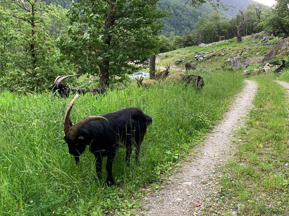 Alto Ticino (11)