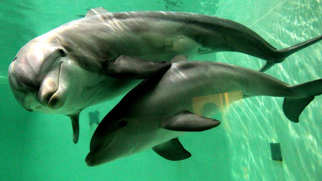 Delfin - Bildquelle: dpa