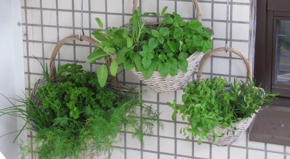 Kräuter Auf Dem Balkon Pflanzung Und Pflege Sat1 Ratgeber