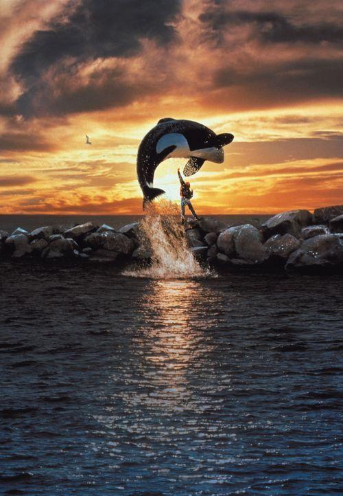 Ein zwölfjähriger Ausreißer (Jason James Richter). Ein riesiger Wal. Ein mitreißendes Abenteuer um eine außergewöhnliche Freundschaft. - Bildquelle: Warner Bros.