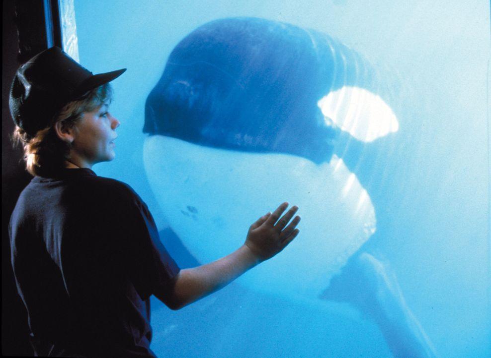 Der Ausreißer Jesse (Jason James Richter) ist von dem gewaltigen Tier sofort fasziniert. Als er erfährt, dass der Parkbesitzer den Wal verkaufen wil... - Bildquelle: Warner Bros.