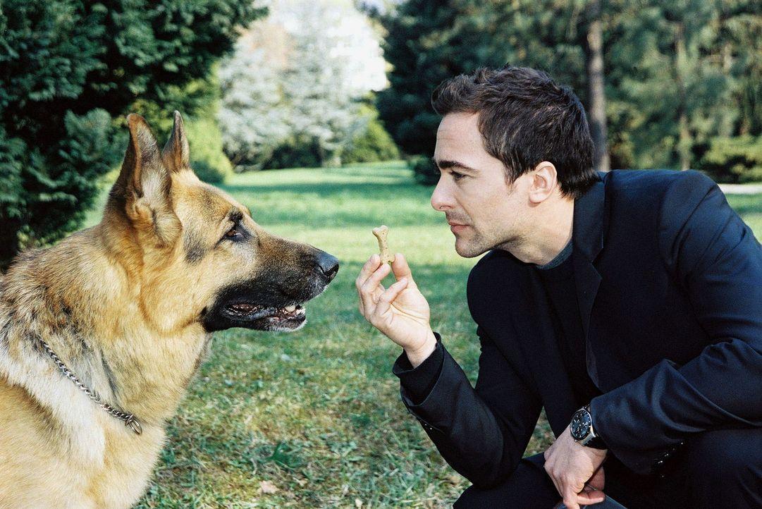 In einem Park wurden vergiftete Hundekekse ausgestreut und ein kleiner Hund ist daran gestorben. Marc (Alexander Pschill, r.) und Rex machen sich au... - Bildquelle: Sat.1