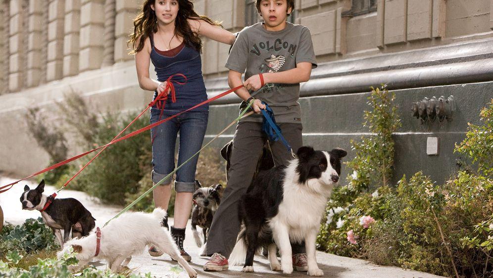 Das Hundehotel - Bildquelle: MMVIII MavroCine Pictures GmbH & Co. KG All Rights Reserved.