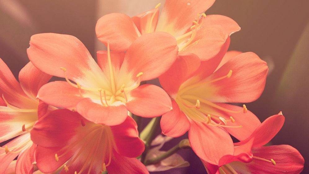 - Bildquelle: Pixabay.com