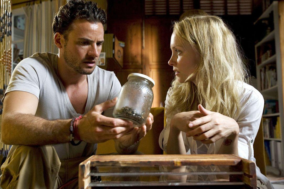 Ben (Stephan Luca, l.) und Karla (Janin Reinhardt, r.) untersuchen die Bienen, die sie bei der verlassenen Imkerei aufgefunden haben. Nur handelt es... - Bildquelle: Sat.1