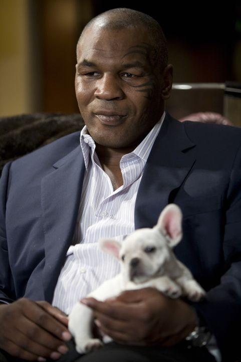 Wenn es um seinen Tiger geht, versteht Mike Tyson keinen Spaß ... - Bildquelle: Warner Brothers