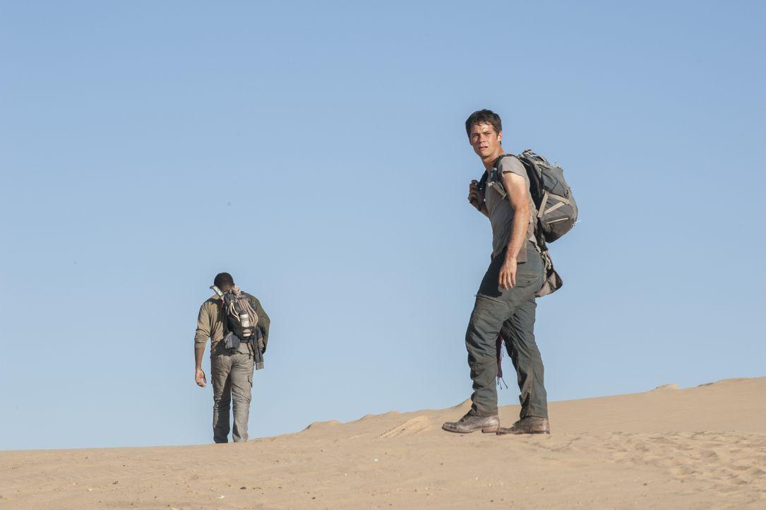 Der Weg durch die Brandwüste ist weit und gefährlich für Thomas (Dylan O'Brien) und seine Freunde. Aber nicht nur die glühende Hitze und mörderische... - Bildquelle: 2015 Twentieth Century Fox Film Corporation. All rights reserved.