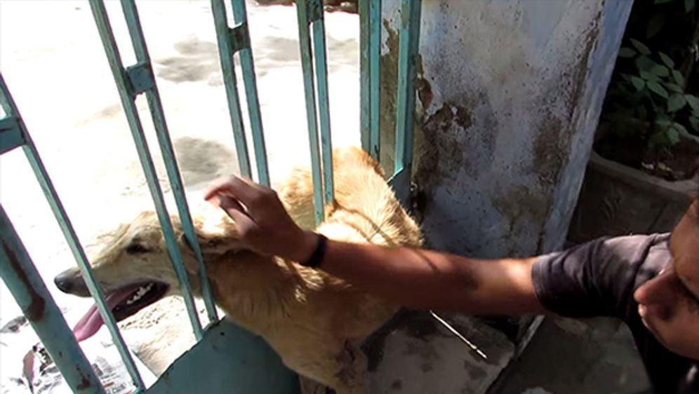 - Bildquelle: Youtube - Animal Aid Unlimited India