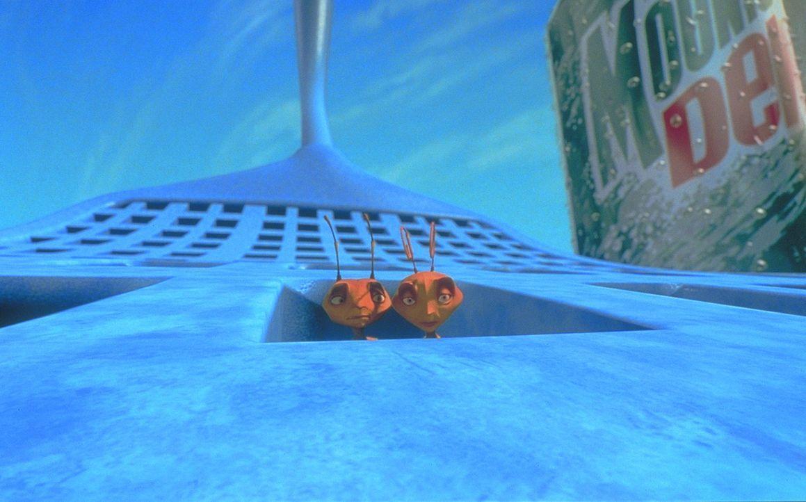 Im Kampf mit Fliegenpatschen: Bala (r.) und Z (l.) ... - Bildquelle: DreamWorks Distribution LLC