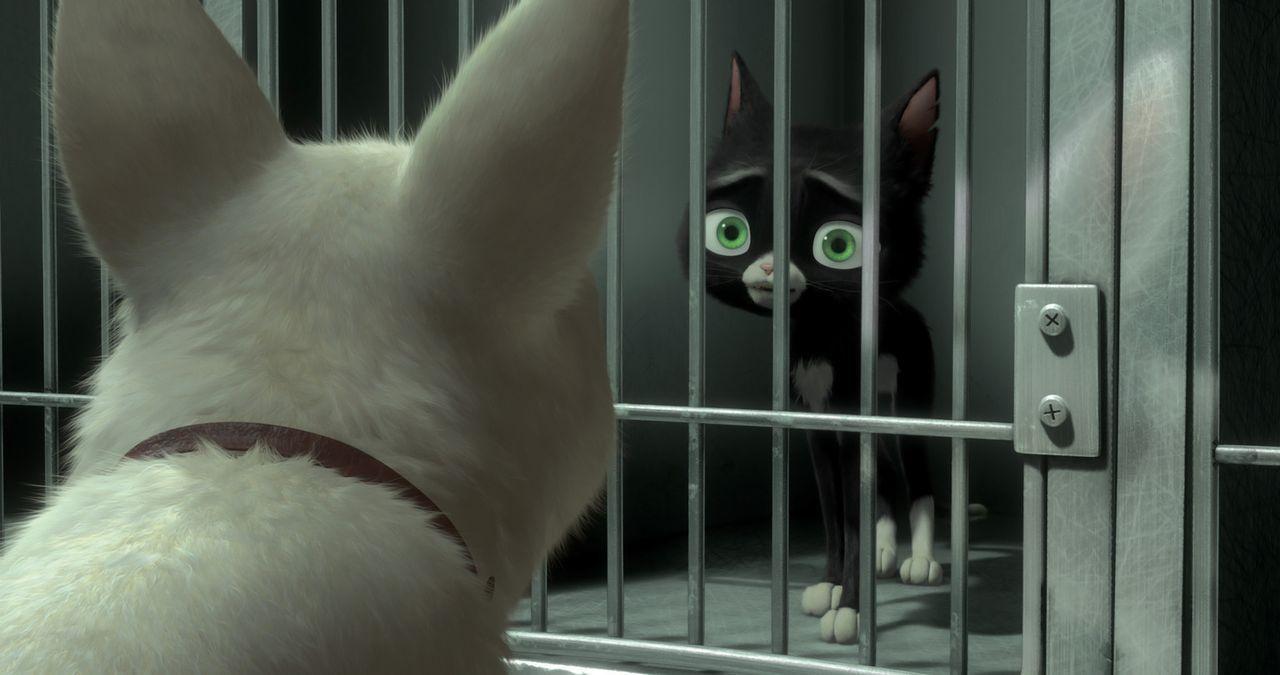 Mittens (r.) kann kaum glauben, dass Bolt (l.) tatsächlich gekommen ist, um sie aus dem Tierheim zu befreien ... - Bildquelle: Disney Enterprises, Inc.  All rights reserved