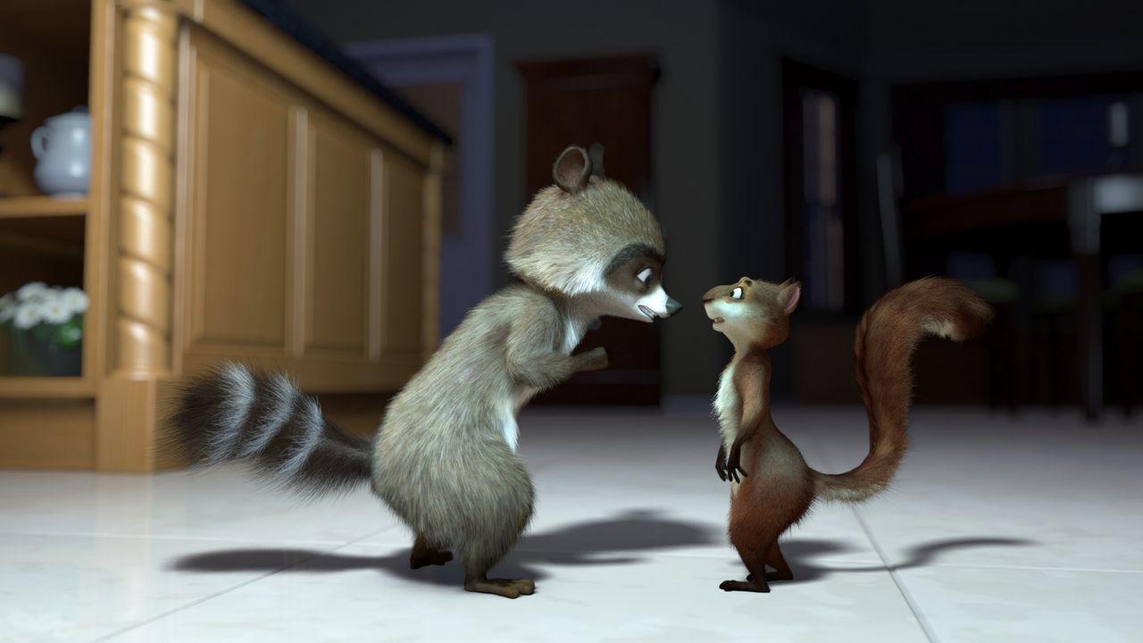 Richie (l.) gibt dem völlig überdrehten Eichhörnchen Hammy (r.) letzte Anweisungen für den Raubzug durch die Vorratskammern der Menschen ... - Bildquelle: United International Pictures